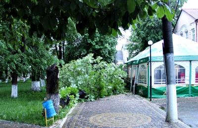 В райцентре на Буковине дерево упало на торговый павильон (ФОТО)