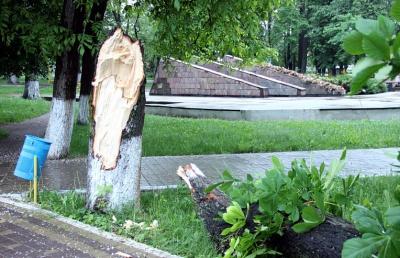 У райцентрі на Буковині дерево впало на торговий павільйон (ФОТО)