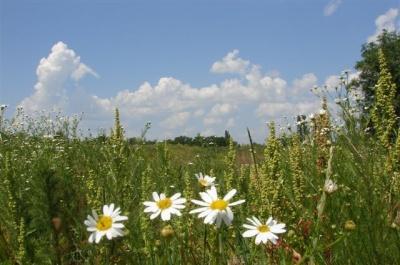 В Черновцах сегодня будет облачно и до 25 градусов тепла