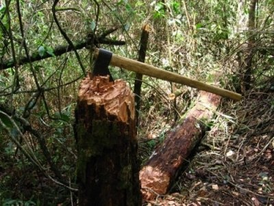 Мужчина на Буковине нарубил дров на 50 тыс. гривен штрафа