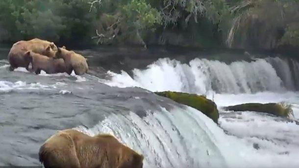 Google розпочав трансляції дикої природи (Відео)