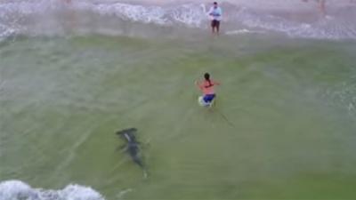 Чоловік впіймав велетенську рибу-молота: відео
