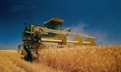 Завдяки погоді на Буковині очікується великий урожай зернових