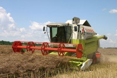 Урожай на Буковині буде більший, ніж торік
