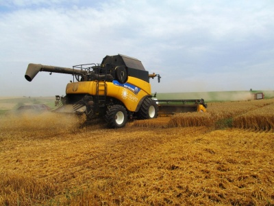 Жатва на Буковине: на Кицманщине аграрии намолачивают 100 центнеров с одного гектара