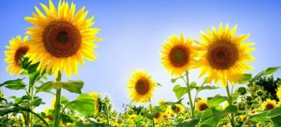 Август на Буковине не будет жарким и с небольшим количеством осадков