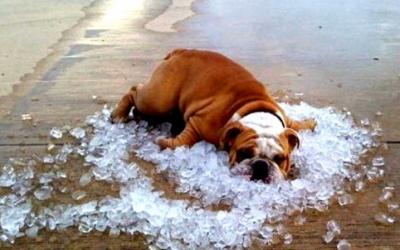 До 34 градусів: у вихідні в Чернівцях буде спекотно