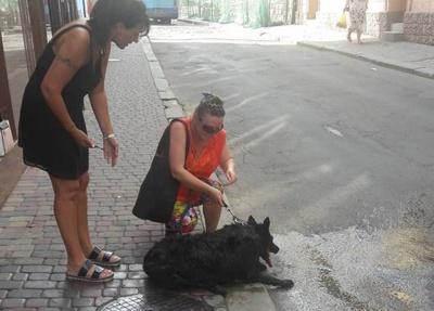 В Черновцах из-за теплового удара собака упал посреди тротуара: такси отказывались довезти животное домой