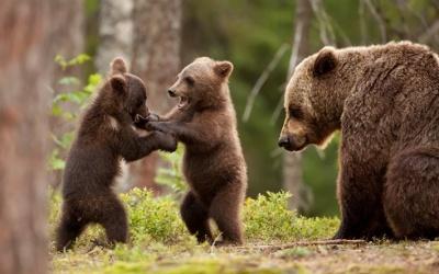 В зоопарке на Буковине родилось двое ведмежаток