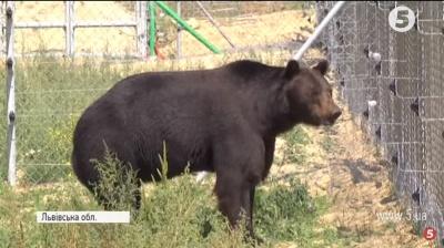 Медведя из Буковины поселили в приюте для животных на Львовщине (ВИДЕО)