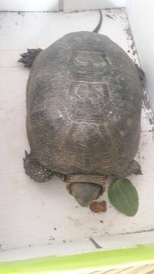 В приют для животных в Черновцах привезли черепаху
