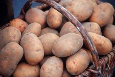 Найбільше української картоплі купила Білорусь