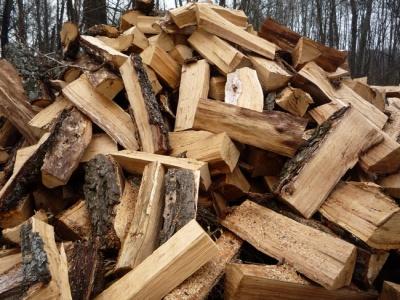 З Буковини експортують переважно дрова, - лісівники