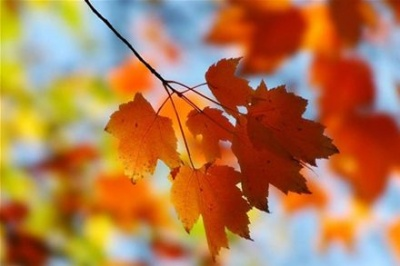 Синоптик розповіла, якою буде погода у Чернівцях першого вересня