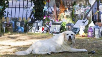Новий Хатіко: пес Джорджа Майкла вже кілька місяців чекає на хазяїна біля його меморіалу (ФОТО)