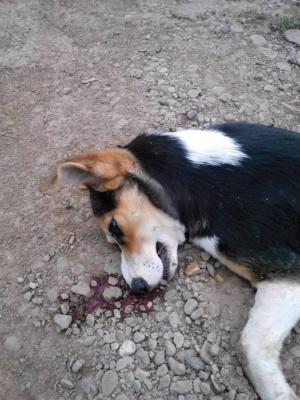 В Черновцах мужчина убил собаку у ворот приюта для животных