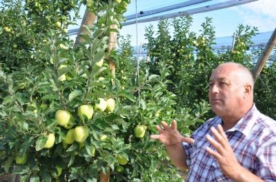 Яблоки из Буковины - в Сингапур и Ираке: фермер создал уникальный сад
