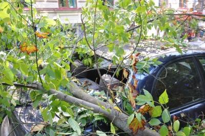 У центрі Чернівців на автомобіль впало дерево (ФОТО)
