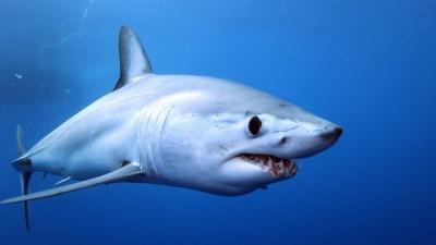 Відважна жінка спіймала акулу руками та віднесла її в океан: курйозне відео