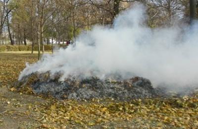 Буковинцям нагадують: спалювати листя шкідливо і за це передбачено  штраф