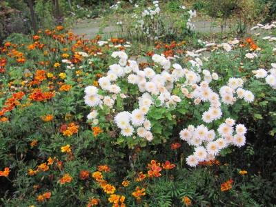 Жовтіє обліпиха і цвітуть останні квіти осені: у Чернівцях у дендропарку ростуть понад 100 видів рослин