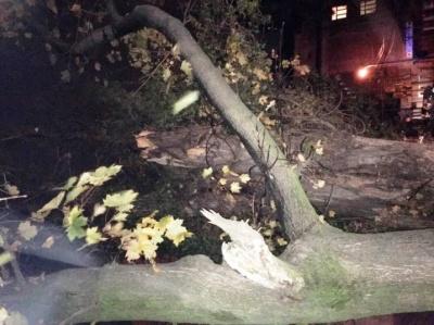 Вулицю Садову в Чернівцях перекрито – дерево впало на дроти