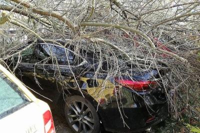 У Польщі внаслідок буревію загинули двоє людей