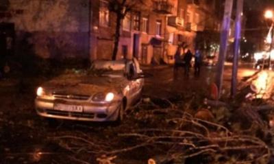 Дерево у Чернівцях впало на авто з людьми – водія затиснуло всередині