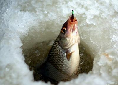 На зимувальних ямах у річках Буковини заборонили риболовлю