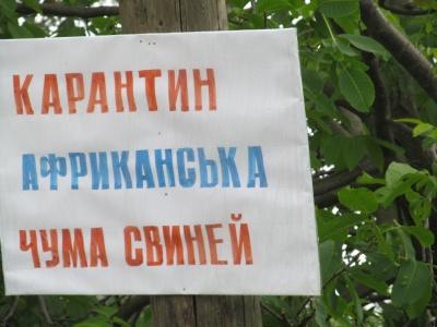 На фермі на Буковині, де виявили АЧС, заб'ють і спалять 160 свиней