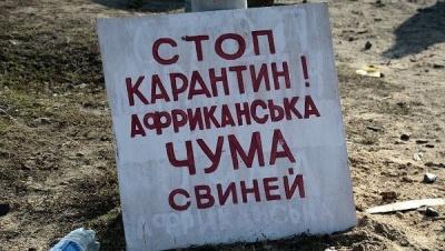 У буковинському селі, де виявили АЧС, відправлять на забій усіх свиней