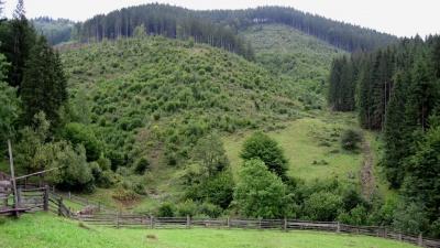На Буковині звільнили від покарання лісівника, який не виявляв крадіїв лісу