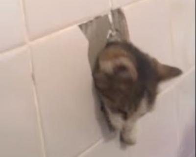 У Чернівцях зі стіни будинку визволили кота, який більше двох діб просидів у вентиляційній шахті