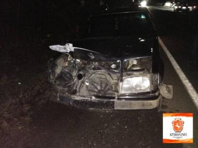 На трасі поблизу Чернівців «Мерседес» збив чотирьох вепрів: пошкоджено автомобіль (ФОТО)