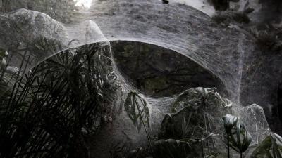 Павуки огорнули павутиною ліс в Ізраїлі: страхітливі фото