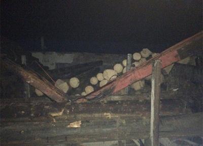 Поліція затримала двох крадіїв лісу в Чернівецькій області