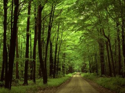 Чернівецька облрада просить вищі органи влади не передавати ліси у концесію