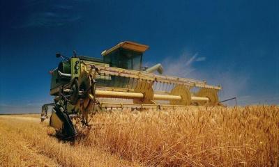 Урожайність зернових на Буковині на чверть вища, ніж торік