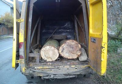 Мешканці Тернопільщини крали ліс на Буковині (ФОТО)
