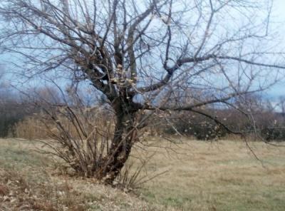 На Буковині прохолодно і без опадів