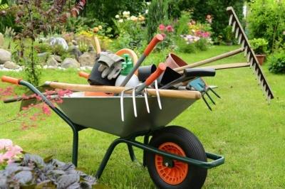 Від морозу – шини, від гризунів – сало: буковинські садівники порадили, як підготувати сад до зими