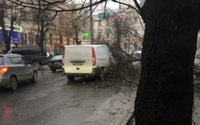У Чернівцях на вулиці Садовій обвалилося дерево, зруйнувавши частину огорожі: рух ускладнений