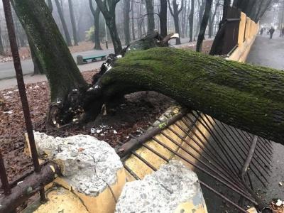Дерево, що впало на Садовій у Чернівцях, зачепило школяра (ФОТО)