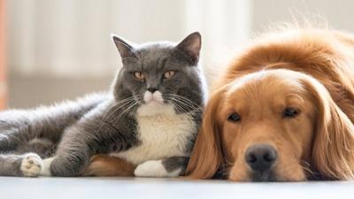 Кішки чи собаки: вчені дослідили, хто розумніші