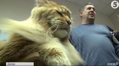 У Дніпрі визначили найбільшого кота в Україні