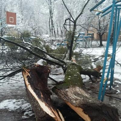 У Чернівцях аварійне дерево впало на спортмайданчик школи