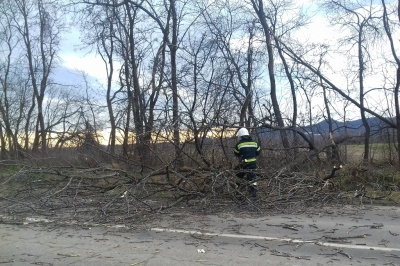 Негода на Буковині: дерево впало перед автомобілем, водія травмовано