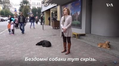 «Вони тут скрізь, але не агресивні»: сім'ю американців здивували безпритульні собаки на вулицях Чернівців