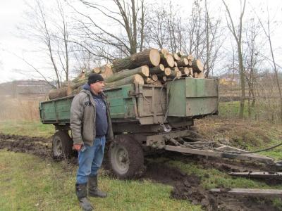 Обрізують сухожилля зрілих дубів: на Буковині зафіксували новий вид браконьєрства