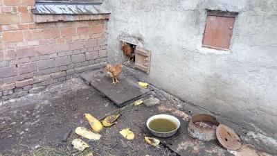 У Чернівцях робоча група мерії не знайшла порушень у ліцеї, де депутати виявили сауну і двох свиней